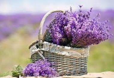"""""""Lavender"""" pampering"""